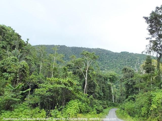 Birding in West Papua of Indonesia