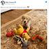 Τα αγαπημένα παιχνίδια του σκύλου! Μήνυμα του Αμερικανού ΥΠΕΞ προς την Κίνα;