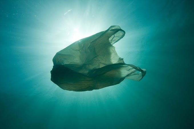 Inspiring Slogans For Plastic Pollution Awarenss