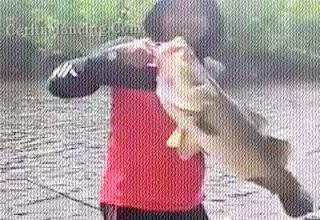 Mancing Casting Dapat Ikan Barramundi Besar Sampai Patah Joran