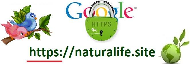 http://www.naturalife.site/2018/05/ssl-google.html
