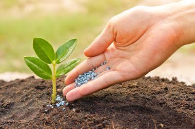 How Much Fertilizer To Use In Vegetable Garden