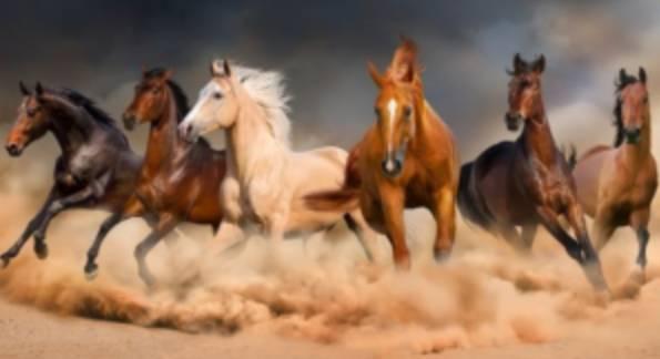 Arti Mimpi Dikejar Kuda