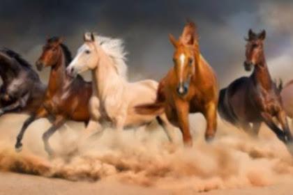 Ini Dia 7 Arti Mimpi Dikejar Kuda Lengkap Dengan Maknanya Bagi Kehidupan