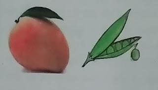 फल एवं बीज