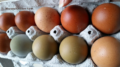brown, blue and green farm fresh chicken eggs