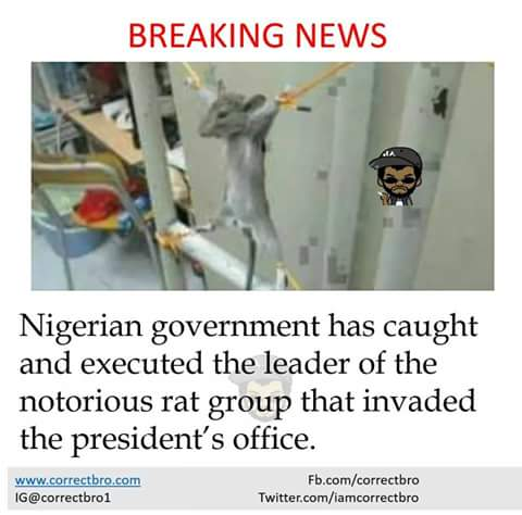 [funny] 😂 the Leader of those rat that broke into our presido's office as being executed!!!