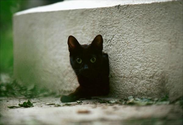 madrid gatos retiro