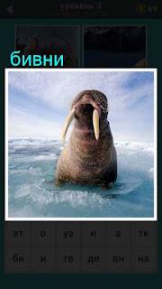 из воды выглядывает морж с огромными бивнями в игре 667 слов 3 уровень