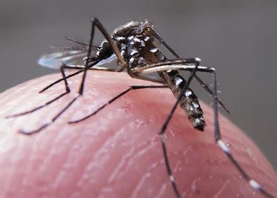 Verão aumenta risco de proliferação do Aedes aegypti; veja dicas