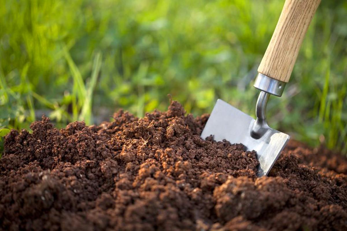 Cara cepat menanam cabe rawit di pekarangan rumah