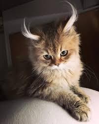 القطط والدوده الدائري