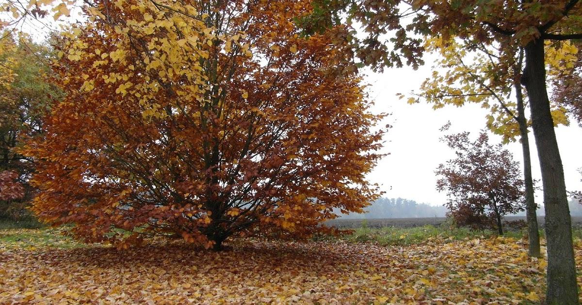 Herbst Evergreens Lyrikheute