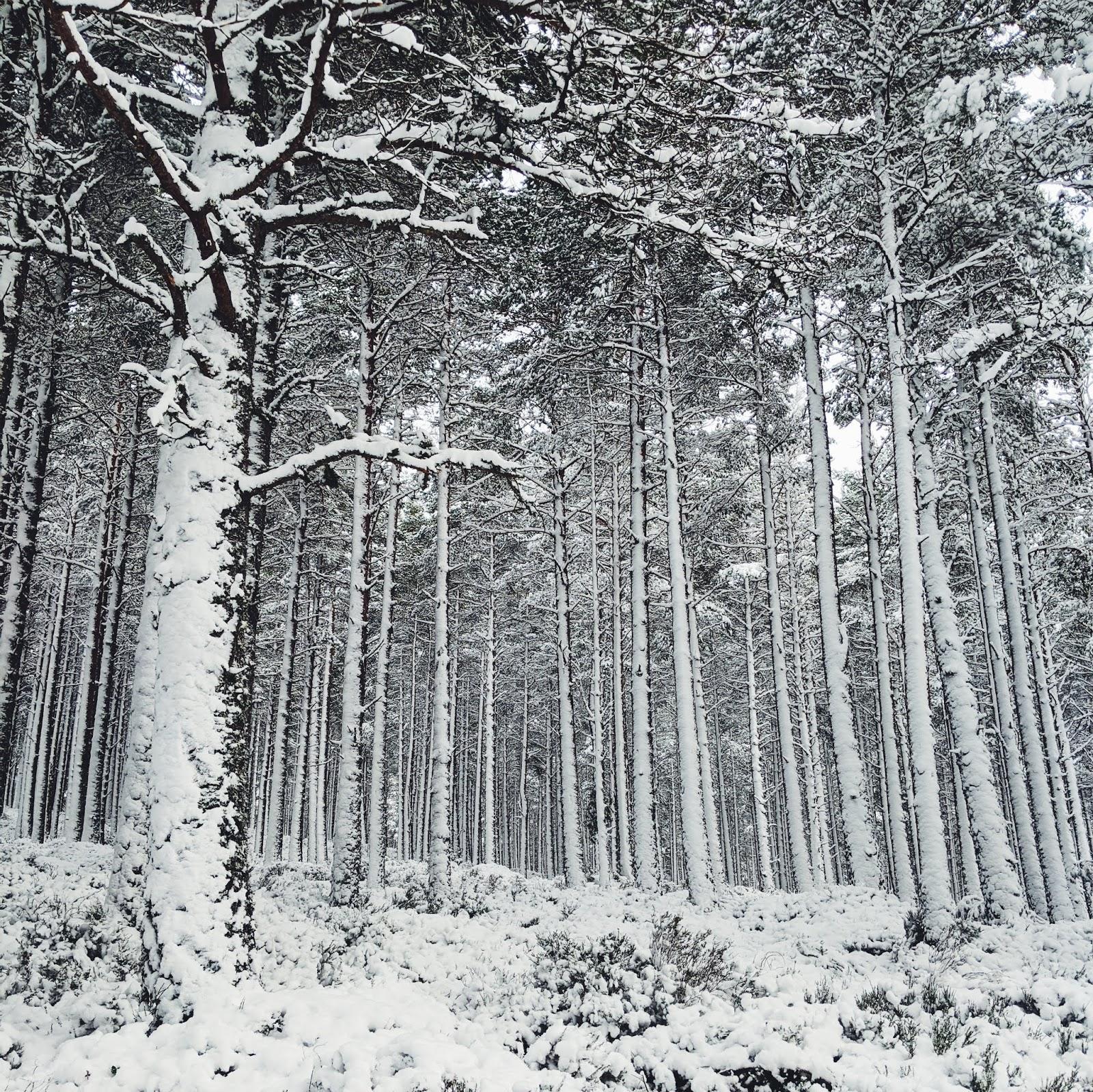 snowy cairngorms aviemore woods liquid grain liquidgrain