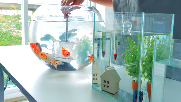 how big of a tank does a goldfish need