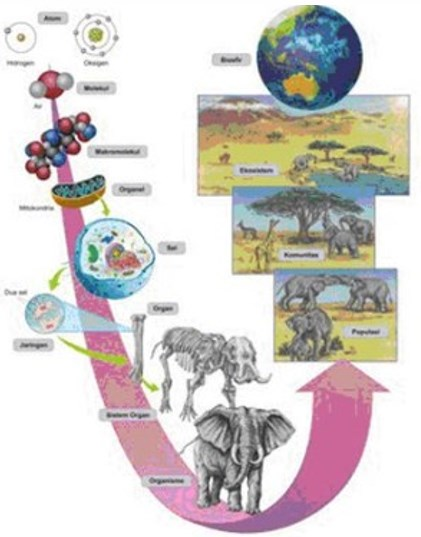 Peran Biologi Sebagai Ilmu Pengetahuan dan Ruang Lingkup Biologi