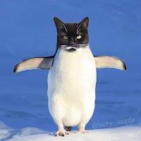 Si todos los animales tuvieran cara de gato