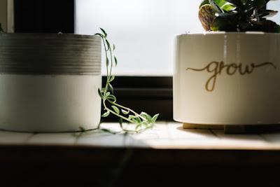 مصطلحات الفعل Grow في اللغة الانجليزية