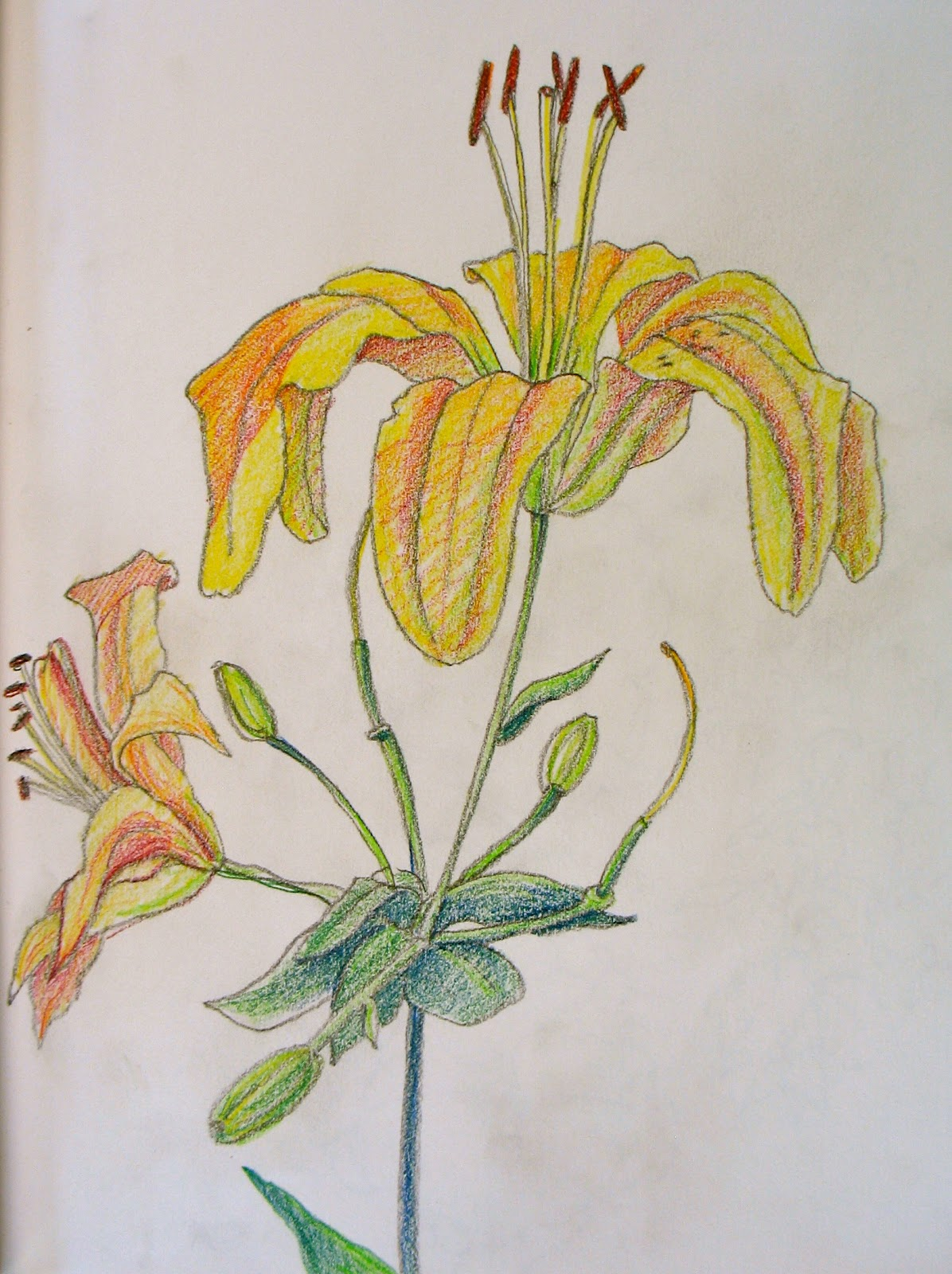 35 Beautiful Flower Drawings and Realistic Color Pencil ... |Flowers Color Drawings