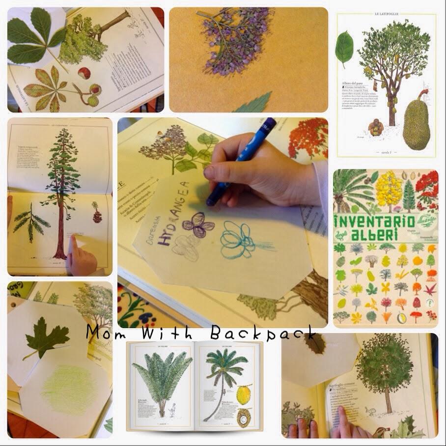 Come Costruire Un Erbario mom with backpack: make a herbarium