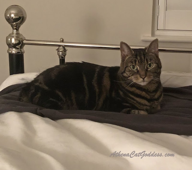 tabby cat on the bed