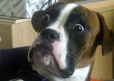 Resultado de imagem para foto de cachorro assustado
