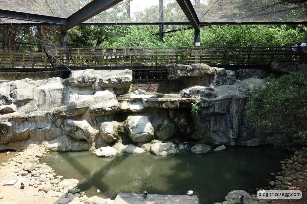 新竹市立動物園(60).JPG