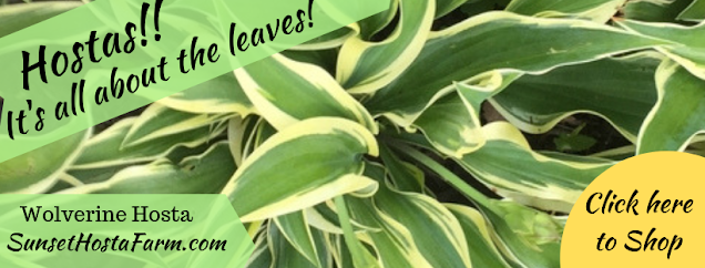 Hostas!  It's about the leaves!