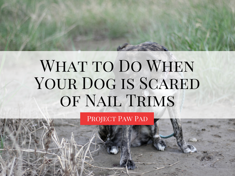 What to do when your dog is scared of nail trims | Project Paw Pad #dogtraining #dogbehavior