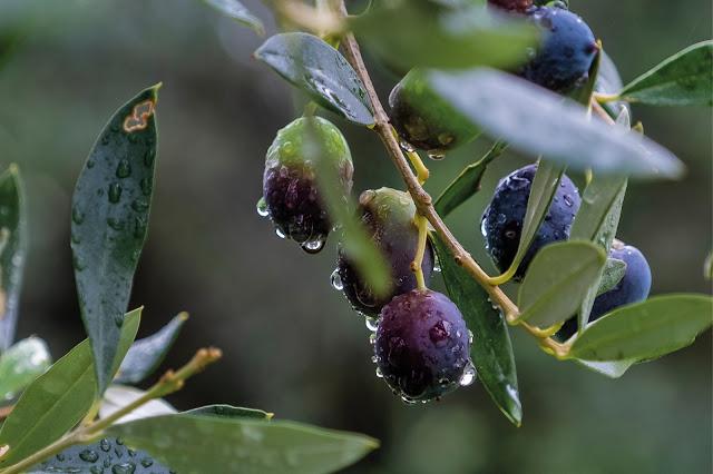 After the Rain / Olives © Chris Zintzen @ panAm productions 2019