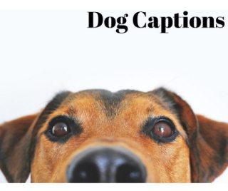 Dog Captions