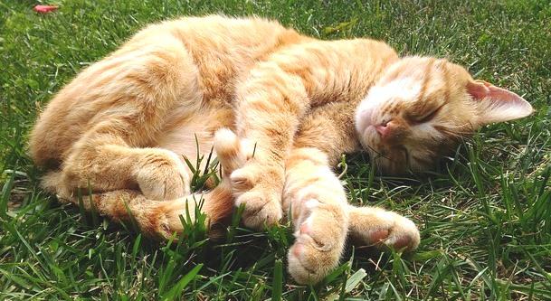 Arti Mimpi Kucing Mati menurut Primbon Dan Lainnya