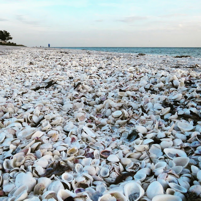 Seashells on the beach in Sanibel Island, Florida