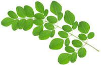 manfaat gagang daun kelor