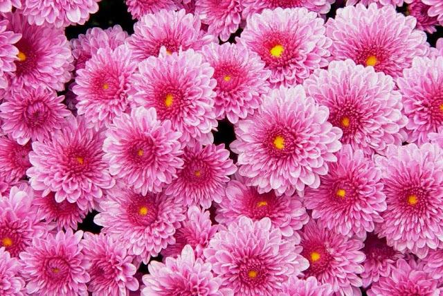 Πες μου τι μήνα γεννήθηκες, να σου πω τι λουλούδι είσαι