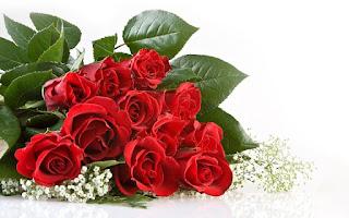 ورد جوري احمر جميل