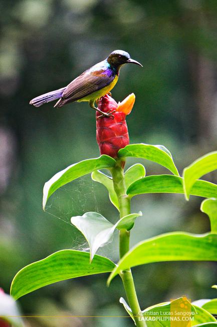 Singapore Botanic Gardens Birds
