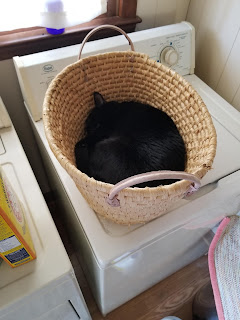 Photo of black cat napping in a laundry basket.