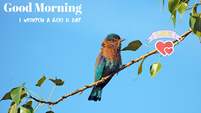 nice looking bird  good morning images
