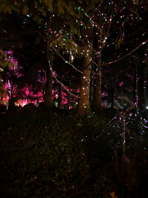 Firefly lights in the trees create wonder.