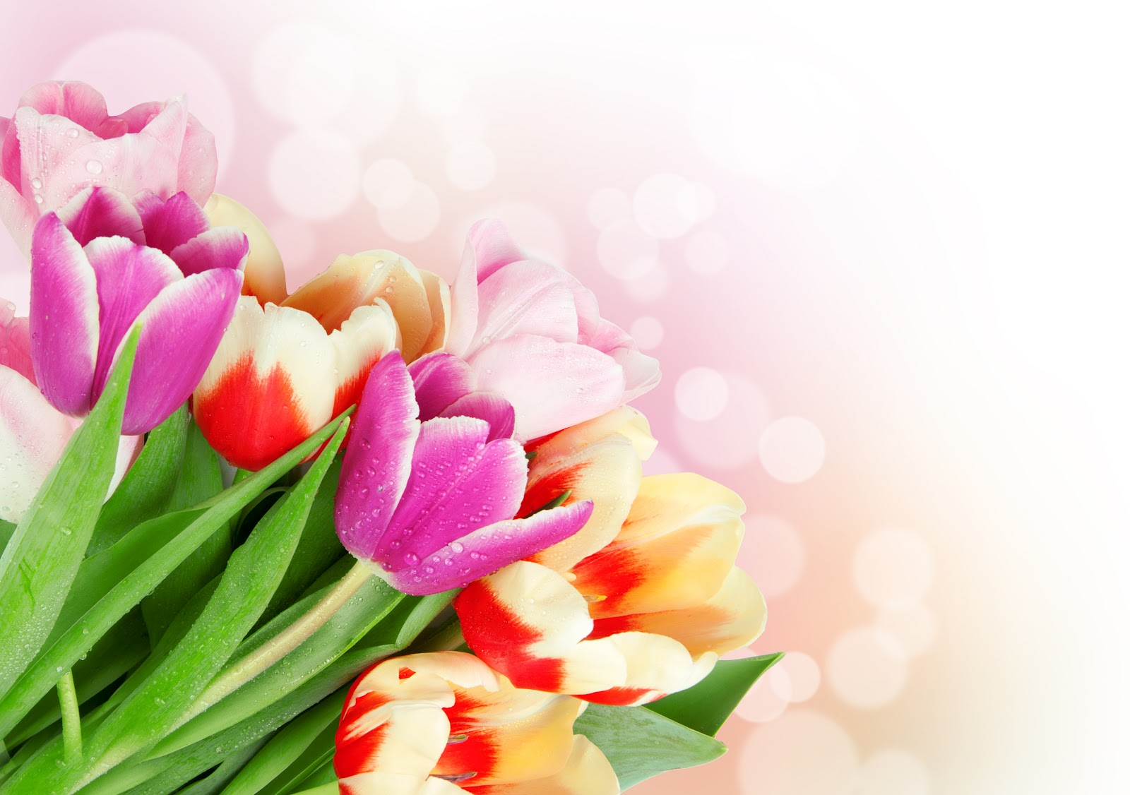Fondos Para Tarjetas Flores Chinas