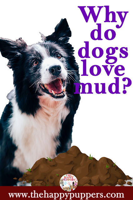 Why do dogs love mud?