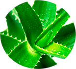 composicao-gel-hot-grow-aloe-vera