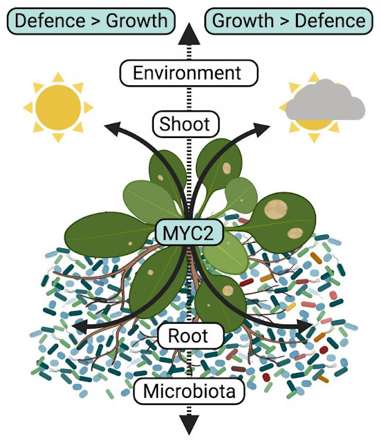 Underground microbial solutions to above ground plant problems