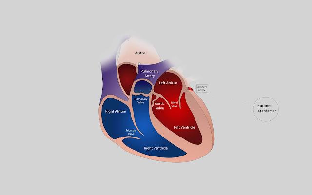Sessiz Kalp Krizi Neden Olur?