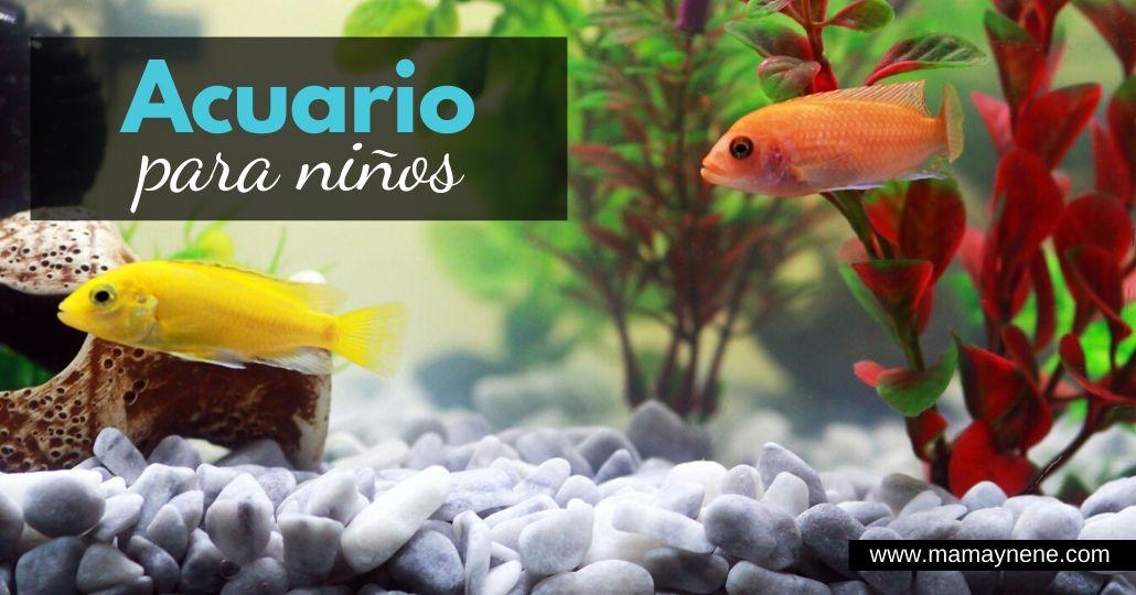 ACUARIO-NIÑOS-PRINCIPIANTES-MAMAYNENE