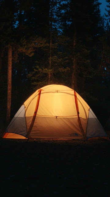 Camping, Night, Forest, Nature