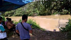 Berita Muaro Jambi : Warga Desa Pudak Muaro jambi Geger, Buaya Besar Tampakkan Diri