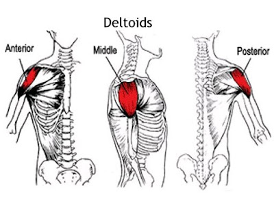 See Ways To Build And Sculpt Your Rear Delts