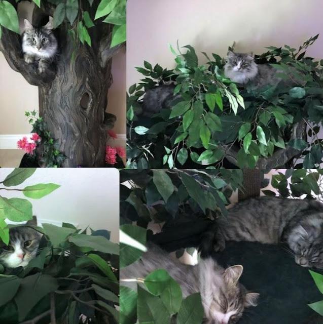 Unique Cat Trees - Ultimate Cat Tree